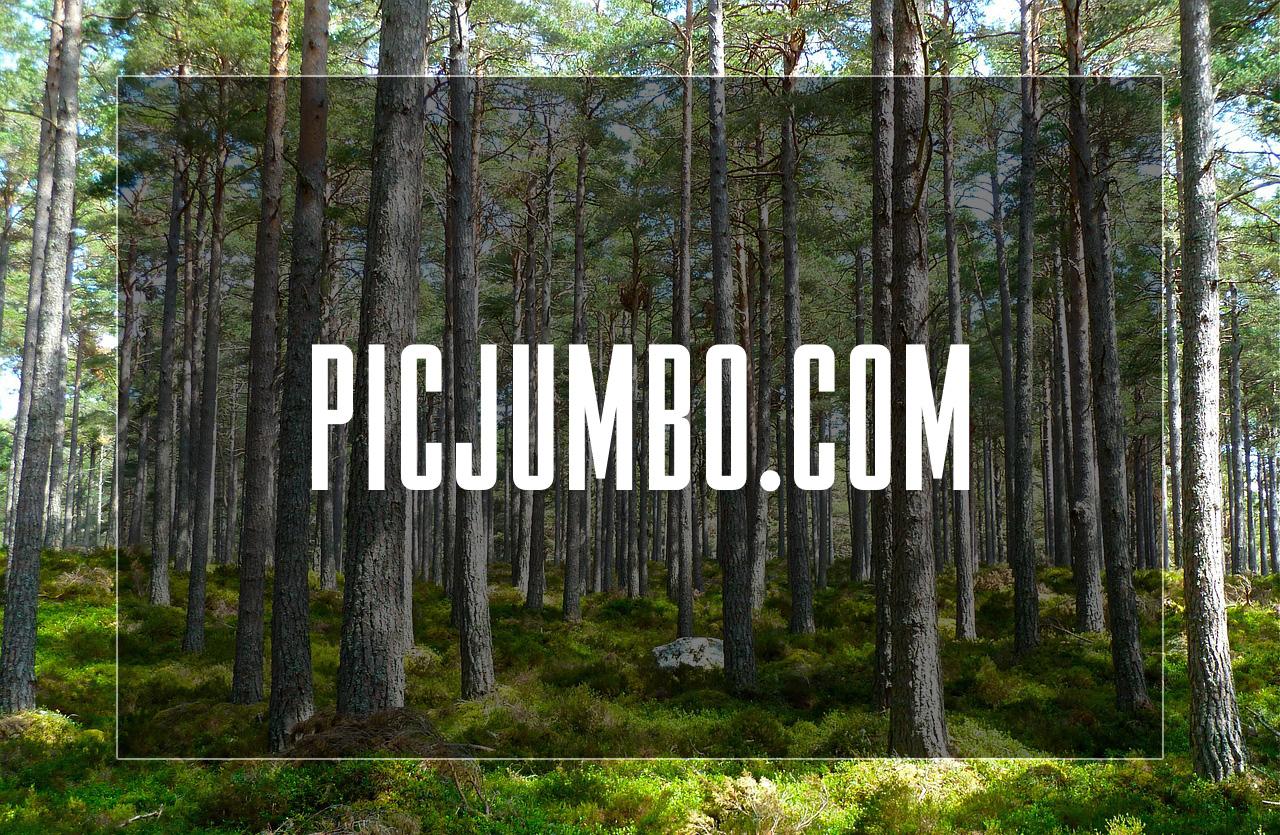 Fotobanka Picjumbo